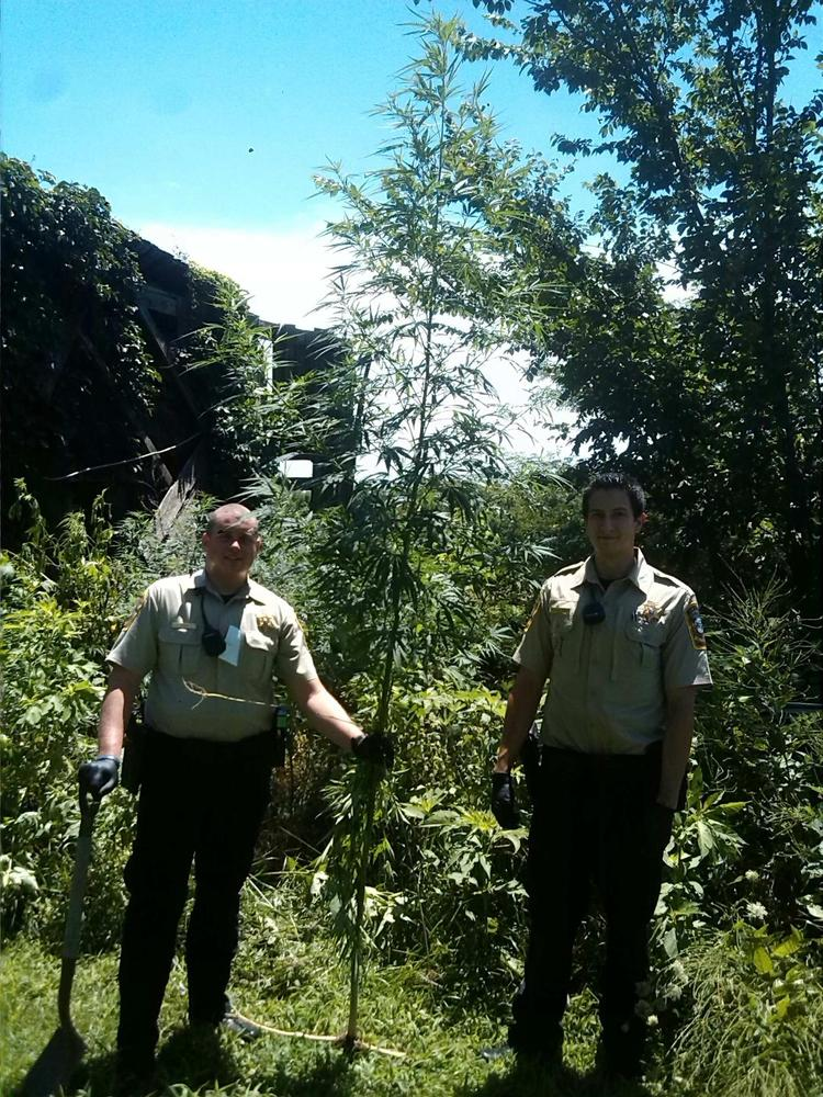 Search Warrant Yields Stolen Property and Marijuana Plants